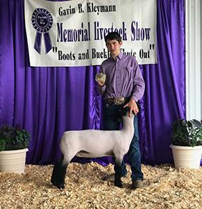Schminke Genetics : Show Lamb Winners